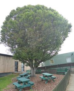 Brookland tree in eco garden
